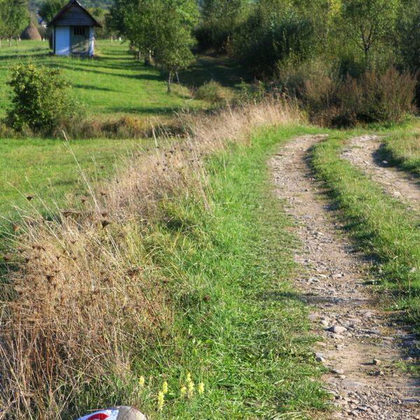 Traseul Creastă-Budești
