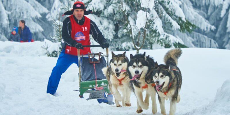 Competiție de sprint cu atelaje canine