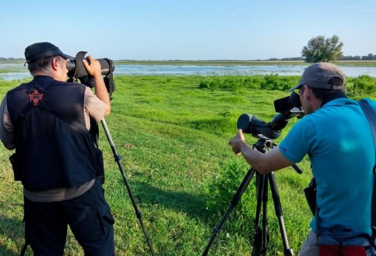 Observare de păsări în Delta Dunării – tur privat