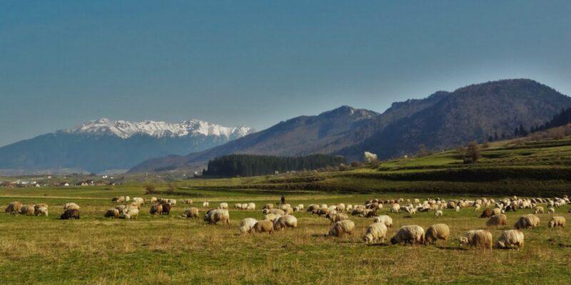 Noroc România – 3 activități