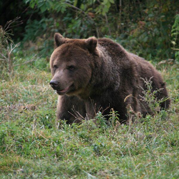 Vizită la observatorul de urși