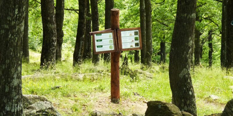 """Traseul tematic-educativ """"Poveștile Pădurii"""""""