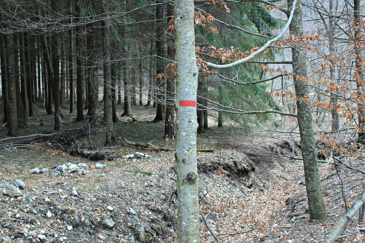 marcaj forestier