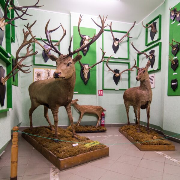 Muzeul de Științele Naturii și Cinegetică – Vatra Dornei