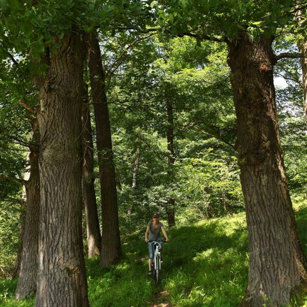 Pădurea Crăiască
